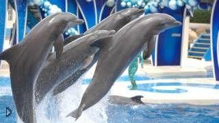 Смотреть онлайн Интересное шоу дельфинов, водная сказка