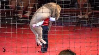 Смотреть онлайн Опасный номер с дрессированными львами