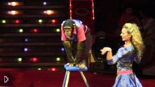 Смотреть онлайн Веселый цирковой номер с обезьяной