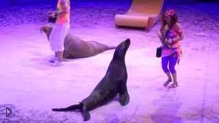 Шоу морских львов и пингвинов - Видео онлайн