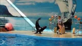 Смотреть онлайн Яркое выступление дельфинария Немо