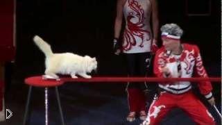 Смотреть онлайн Цирковые трюки с милыми кошками