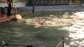 Алматы: дельфины и кит белуха радуют детей - Видео онлайн