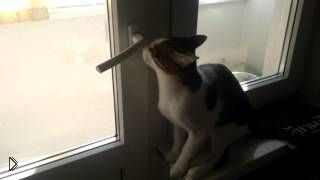 Смотреть онлайн Котик просится на балкон у своей хозяйки