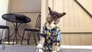 Смотреть онлайн Дрессированный кот в рубашке просит кушать