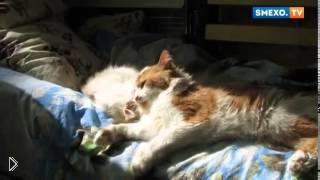 Смотреть онлайн Бесстыжий белый кот хорошо получил по морде от друга