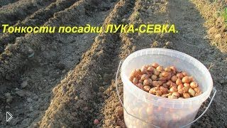 Смотреть онлайн Советы садовода по посадке лука-севка