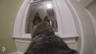 Смотреть онлайн Что делает собака, когда хозяев нет дома: GoPro