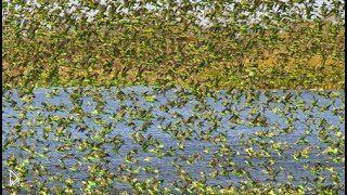 Смотреть онлайн Интересный фильм о природе Австралии