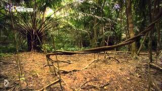 Смотреть онлайн Фильм о дикой природе Амазонки