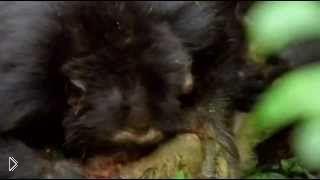 Смотреть онлайн Фильм о диких животных: охота стаей
