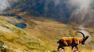 Смотреть онлайн Фильм о дикой природе Кавказа