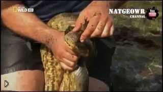 Смотреть онлайн Интересный фильм о змеях: Анаконда