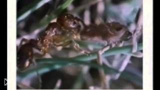 Смотреть онлайн Фильм о бабочках и мотыльках