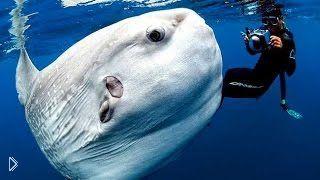 Смотреть онлайн Странные жители мирового океана