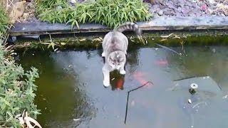 Смотреть онлайн Кот охотится за рыбками на замерзшем пруду