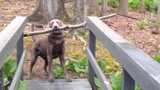 Смотреть онлайн Сообразительный пес удивил хозяуку