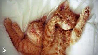 Смотреть онлайн Подборка: Животные засыпают на ходу