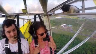 Смотреть онлайн Кот случайно оказался на крыле летающего аппарата