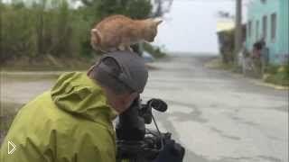 Смотреть онлайн Наглый котенок залез на оператора с камерой