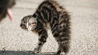 Смотреть онлайн Подборка: Пугливые коты