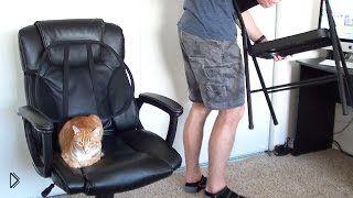 Смотреть онлайн Как выжить работая с котами