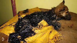 Смотреть онлайн 3-месячный щенок спасен от гибели