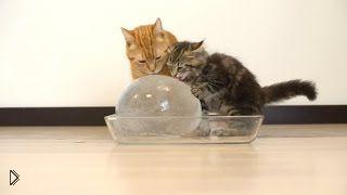 Смотреть онлайн Кошки и котята наслаждаются огромным куском льда