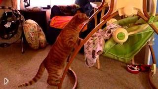 Смотреть онлайн Рыжий кот убаюкал ребенка в люльке
