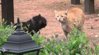 Смотреть онлайн Если бы коты снимались в фильме