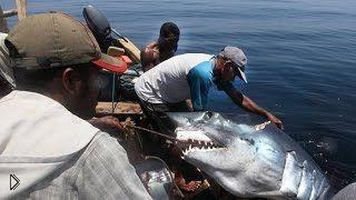 Смотреть онлайн Подборка: Самые жуткие и загадочные жители океана