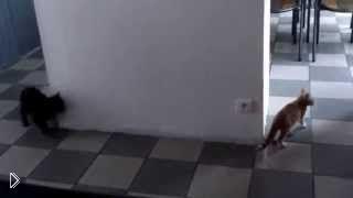 Смотреть онлайн Черный кот отлично знает планировку дома
