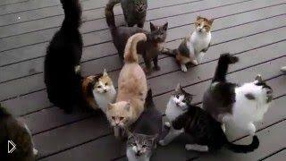 Смотреть онлайн Как заставить кота замолчать