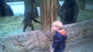 Смотреть онлайн Детеныш обезьяны играет с маленьким посетителем зоопарка