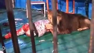 Смотреть онлайн Лев напал на человека в цирке