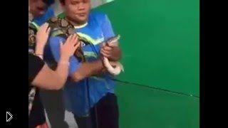 Смотреть онлайн Змея вцепилась в лицо девушки на глазах толпы