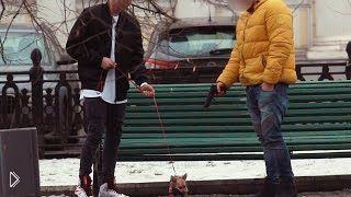 Смотреть онлайн Соц. эксперимент: Убийство собаки за деньги