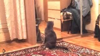 Смотреть онлайн Кота расстроило его отражение в зеркале