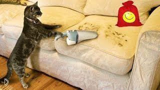Смотреть онлайн Подборка: Коты обожают пылесосы