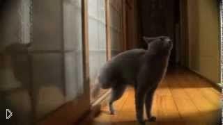 Смотреть онлайн Сообразительный котик стучится в дверь ногой