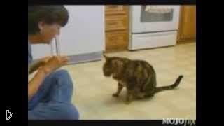 Смотреть онлайн Подборка: Умные коты поражают своей сообразительностью
