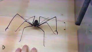 Смотреть онлайн Веселые игры с жутким африканским пауком