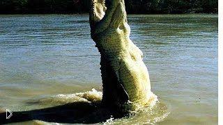 Смотреть онлайн Крокодилы напали на зебру в реке