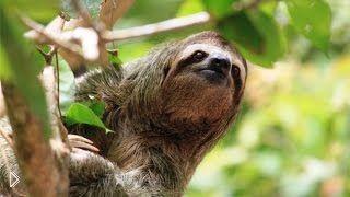 Смотреть онлайн Дикая природа таинственного леса в Перу