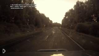 Смотреть онлайн Автомобилисту на одной дороге попались лось и бобер