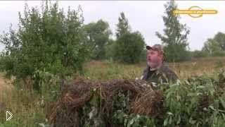 Правила охоты на дикого голубя с чучелами - Видео онлайн