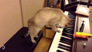 Смотреть онлайн Талантливый кот играет мелодию на пианино