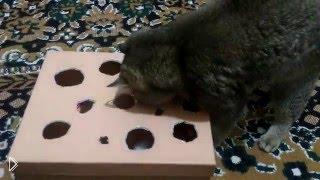 Смотреть онлайн Самодельная игрушка для кота из картонной коробки