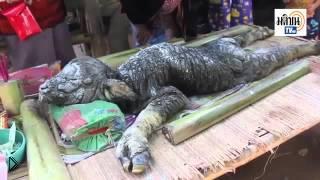 Смотреть онлайн Буйволица родила неизвестное существо в Таиланде