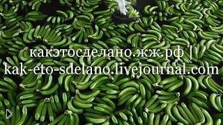 Смотреть онлайн Все о бананах: как выращивают и собирают урожай